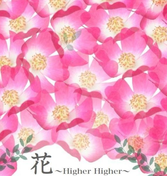 画像1: 花〜Higher Higher〜 (1)